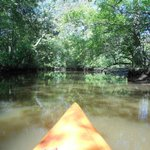 Kayaking on the narrow part of the Pocomoke River