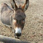 Foto de Krefeld Zoo