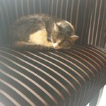Hotel Cat <3