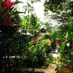 View of the pool, bambu dorm, & garden.