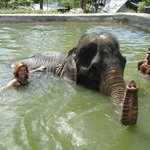 Bath with an elephant