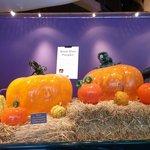 Large Pumpkin display at entrance