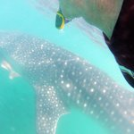 That's me with the Whale Shark