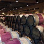 WIne cellar for reds
