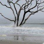 Waves on tree