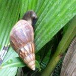 Snail at the Resort