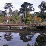 pond at botanical garden