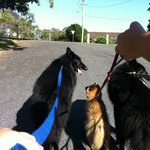 5 minute walk to the beach - our 3 Belgian Shepherds loved it!
