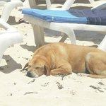 Vittoria, la dolcissima cagnolina che vive nel villaggio (non è randagia!!)