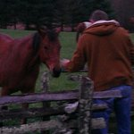 My husband feeding grass to one of the horses.
