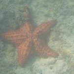Sea star found on ocean floor