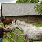 Музей лошади