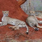 Adam got us so close to the Cheetahs