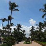 Пальмы отеля