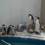 Sanccob Eastern Cape - Penguin Rehabilitation Center