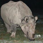 Rhino visiting the hotel