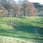 Dyrham Autumn trees