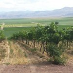 View of Sawtooth Winery vineyard and Owyhee Mountains