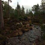 Our walk round the Loch.