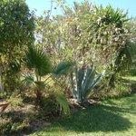 Le parc de l'hôtel... un jardin botanique à lui seul !