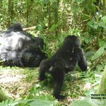 Visita a los gorilas