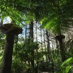 New Zealand ferns canopy