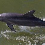 spelende dolfijnen langszij de boot