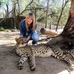 Hautnah mit einem Geparden in Kontakt kommen