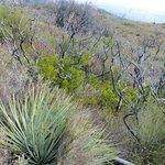 Yuccas & manzanitas