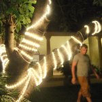 mango trees at night