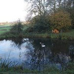 The Duck Pond, Cools Farm