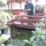 relaxing garden and  pond stocked with colourful fish