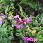 orchidee all'esterno