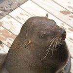 Até encontramos uma foca do lado do Hotel!