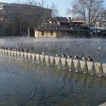 утки принимают термальную ванну