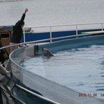 Dolphin tank