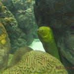 Big eel