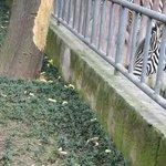 Snaks for the Zebras