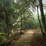 Прогулка в джунги