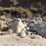 Cayton Bay is great for Fossil hunting.