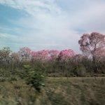 Paisagem do Pantanal Sulmatogrossense