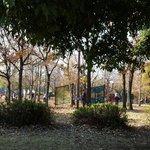 Kiba park,jungle-gym area.