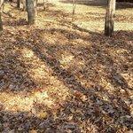 December 1st 2013 Kiba park