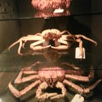 Crabs in the Museum