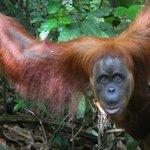 Trek Sumatra - Day Tours