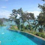 The jungle pool