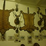 Games Room wall decorated with the Hunting Trophies