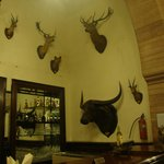 The Bar - decorated with hunting trophies