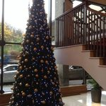 one of the lovely trees at the hotel, very festive