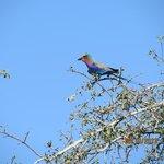 Beautiful bird life